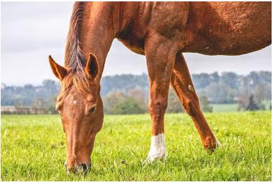 رژیم غذایی اسب
