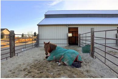 پوشش زمستانی برای محوطه اسبها