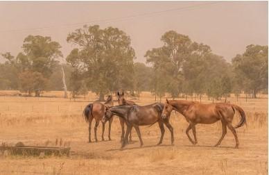 سیستم تنفسی اسب ها