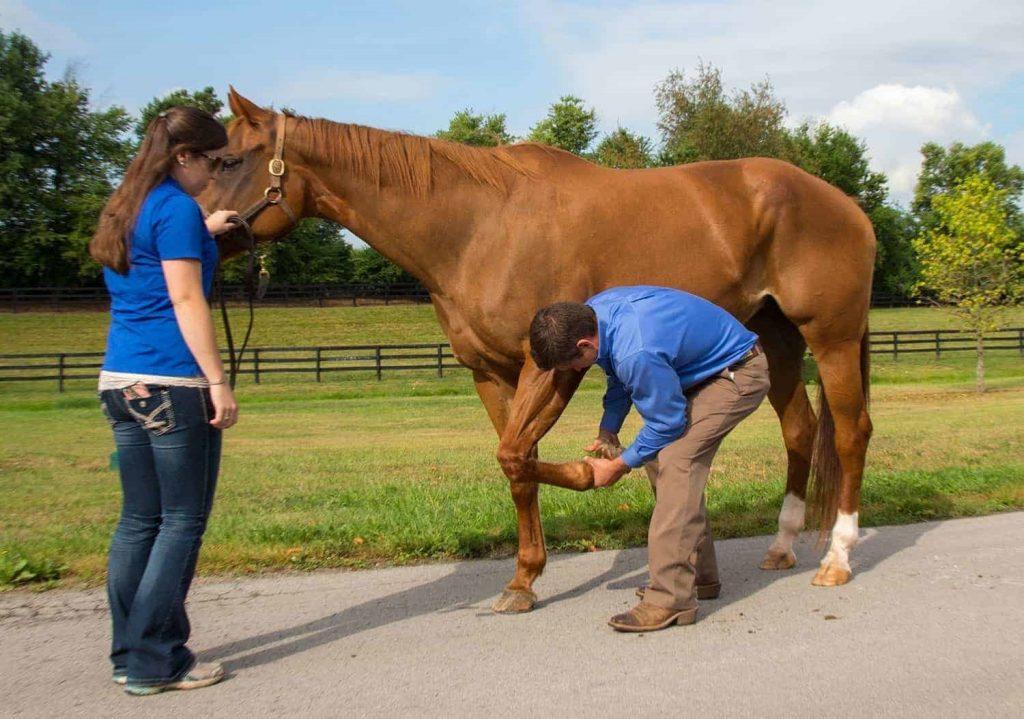 علل تورم پاهای اسب