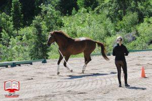 برجستگی مسیر مسابقه اسب ها