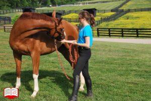 6 خواسته ای که اسب در سال نو از شما دارد