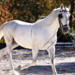 حفظ نژاد اسب های نادر