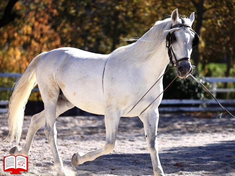 برای حفظ نژاد اسب چه کنیم؟