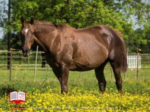 علت سقط اسب ماده چیست؟