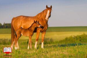 100 روز قبل از تولد کره اسب