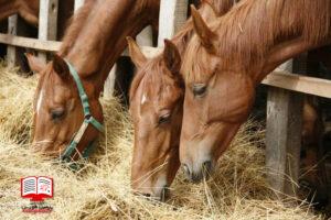 اهمیت به تغذیه اسب