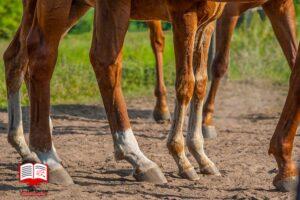مفصل های قوی، تغذیه سالم اسب را به دنبال دارد