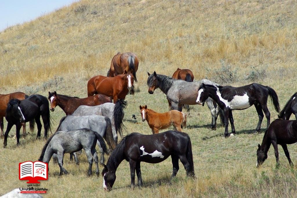 آیا روغن های گیاهی برای فحلی اسب موثرند؟
