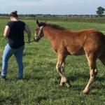 ورزش و سلامتی استخوان کره اسب