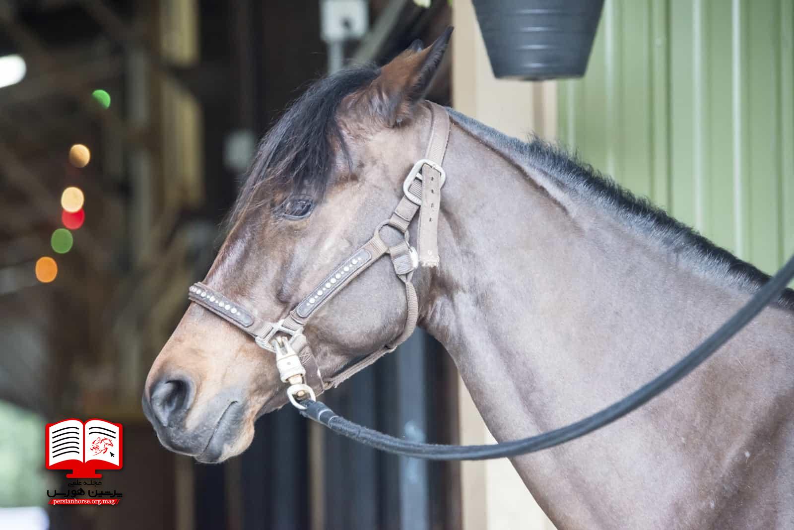 تغییر در تعادل هورمون اسب