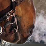 دلایل و درمان سرماخوردگی اسب ها