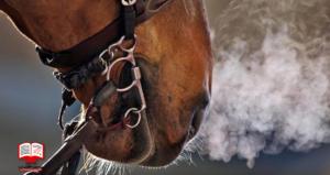 درمان سرماخوردگی اسبها