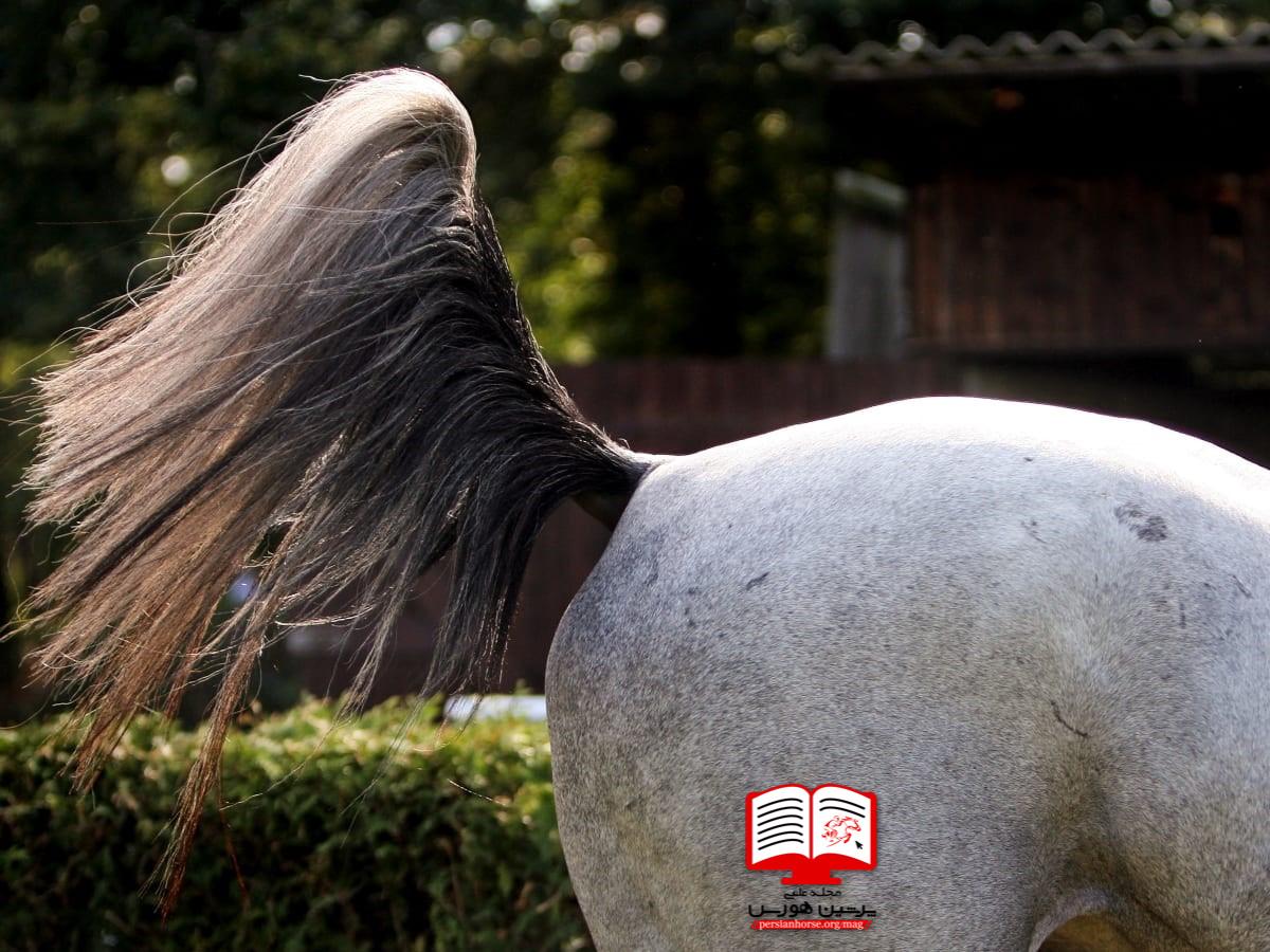 درمان های غیر دارویی برای فحلی اسب