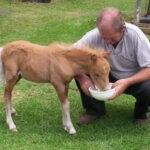 تغذیه شیر جایگزین کره اسب