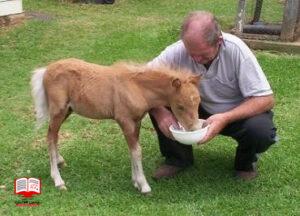 شیر جایگزین کره اسب
