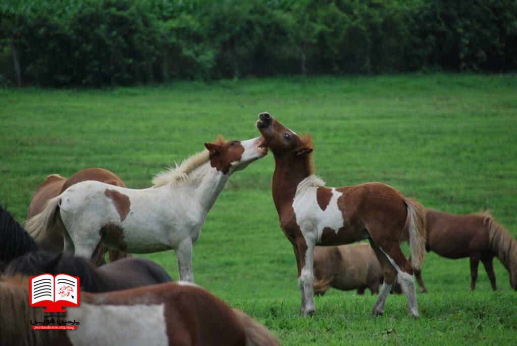 میکروب های روده ای کره اسب را مدیریت کنید
